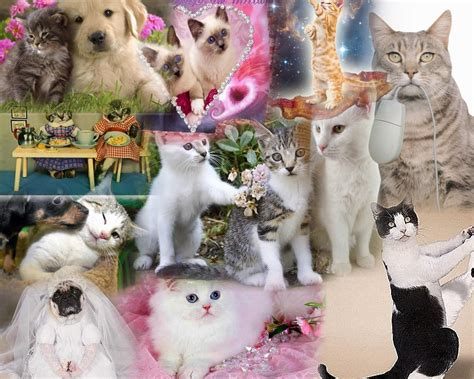 cat wallpaper collage collage of cats wallpaper and background 1500x1200 id