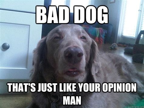 Bad Dog Meme - best of the really high dog meme 16 pics pleated jeans