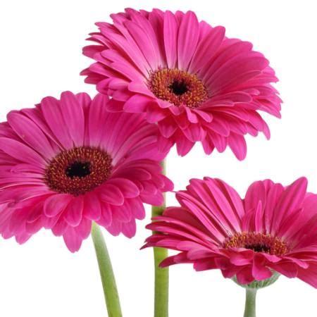 pixwords l image avec fleurs fleur rose violet tatjana