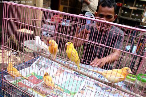 Tempat Makan Burung Kenari fredy memberikan makan anak burung kenari serinus canaria