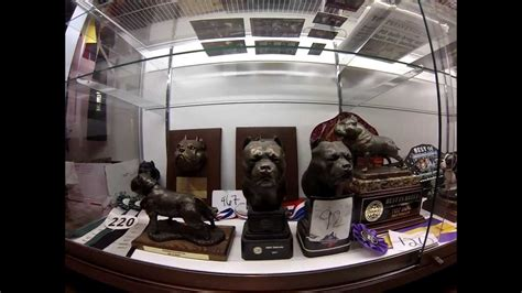 bully room trophies the bully market trophy room american bully history