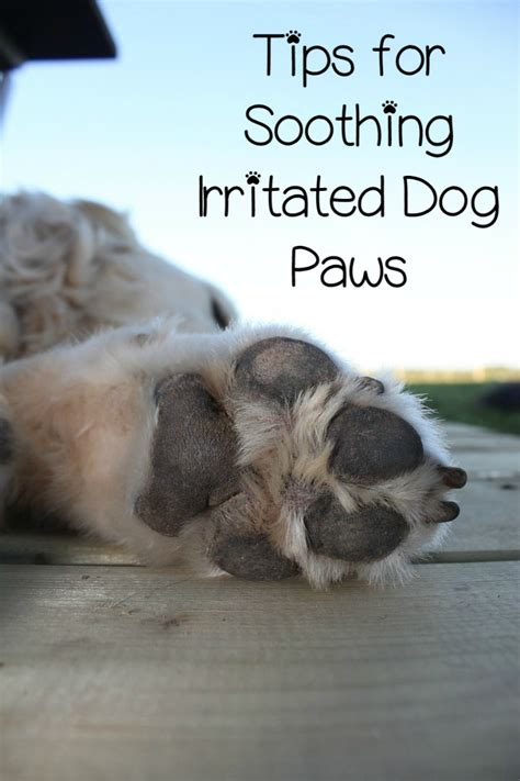 how to stop from paws irritated paws how to stop it dogvills