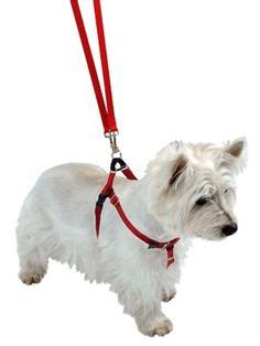 how to your to walk without pulling no pull freedom harness on harness walking and