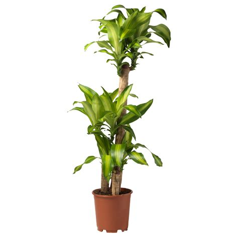 ikea plants ikea ps fej 214 self watering plant pot black 32 cm ikea