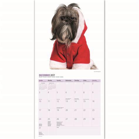 shih tzu free to home ireland shih tzu 2017 16 month calendar 163 9 99 picclick uk
