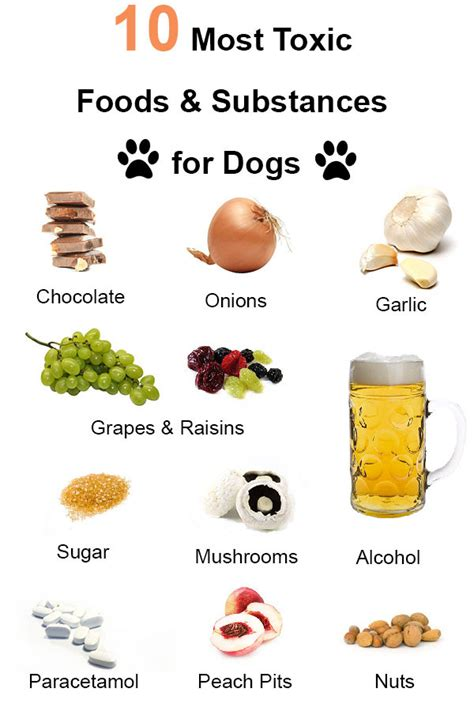 what foods are toxic to dogs most toxic foods for dogs healthy