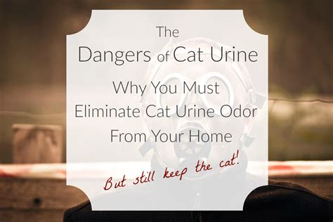 How To Get Urine Out Of Upholstery How Do You Get Cat Urine Out Of Your Carpet Home Fatare