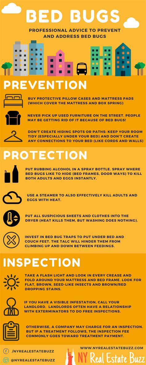 Infographic How To Prevent Bed Bugs Ny Real Estate Buzz