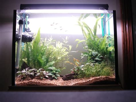 Aquascape Light by Excel Based Non Co2 Low Light Aquascape Aquascaping