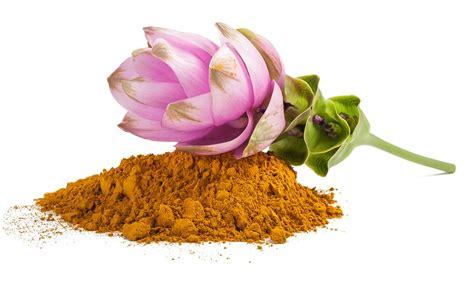 uso della curcuma in cucina la curcuma preziosa per la nostra salute oro in cucina