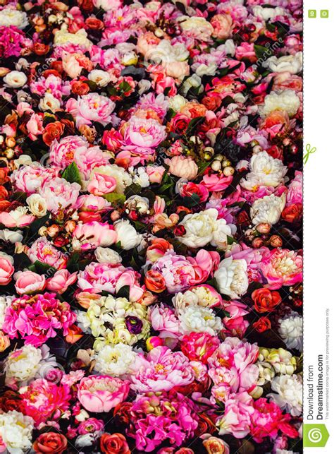 vertical image vertical image of beautiful flowers wall background stock