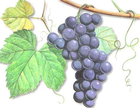 lade uva arreglos de uvas y espigas hechizada souvenirs y regalos