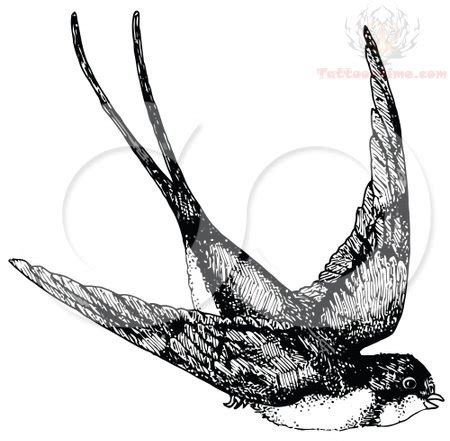 black and white swallow tattoo designs black and white designs