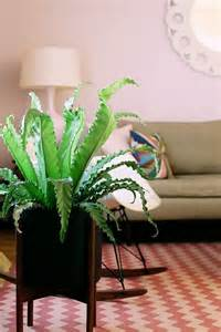 plants that do not need sunlight what indoor plants need little light interior design ideas avso org