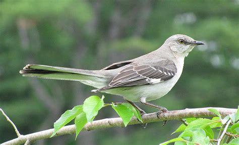 birds of florida
