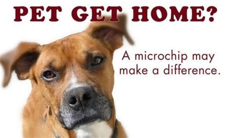 microchip cost low cost microchip clinic vvng real news real fast