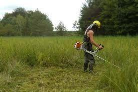 Jasa Potong Rumput Jasa Potong Rumput Jasa Perawatan Taman Tukang Taman