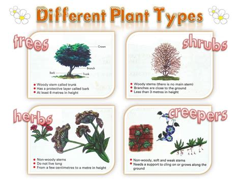 different types of garden plants plants