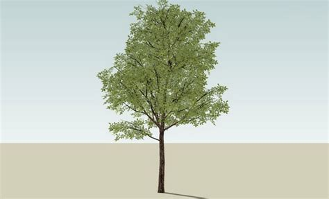 sketchup components 3d warehouse arvore 3 tree