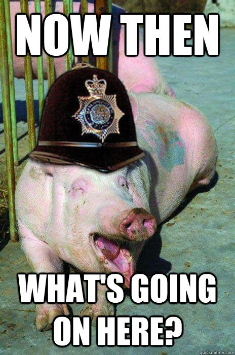 Whats Going On Meme - now then what s going on the here funny pig meme