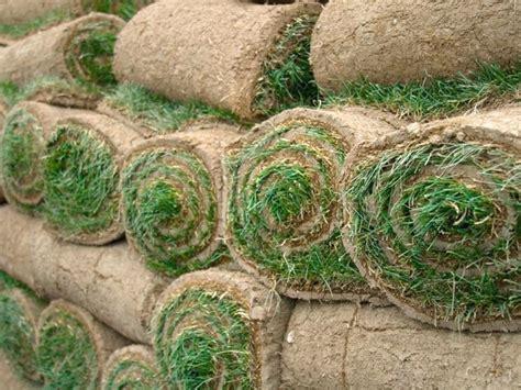 tappeti erbosi prezzi prezzi prato a rotoli prato erba a rotoli