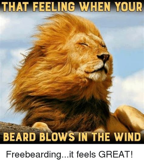 Wind Meme - 25 best memes about when your when your memes