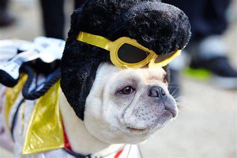 fun halloween costume ideas   pup pedigree