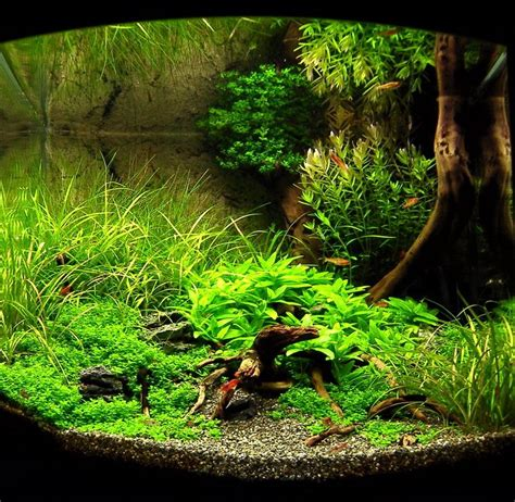 Aquascape Fish by 16 Best Freshwater Aquariums Images On