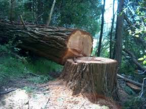 how to cut a tree expert how