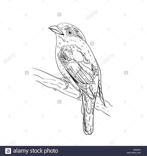 Vector Illustration Sketch Birds Ink Drafts Bird Engraving Birs Black And White Isolated On Vector Image Black White Sketch