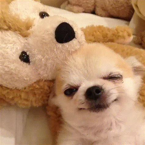 sleepy puppy gif sleepy gif find on giphy