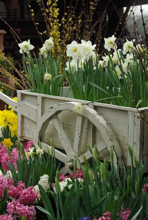 images  spring bulbs  pinterest landscaping