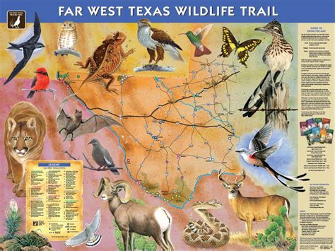 early day stories the overland trail animals and birds that lived here stories looking backward classic reprint books far west wildlife trail mountain trail region