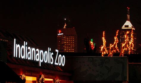 indy zoo christmas lights christmas at the zoo the indiana insider blog