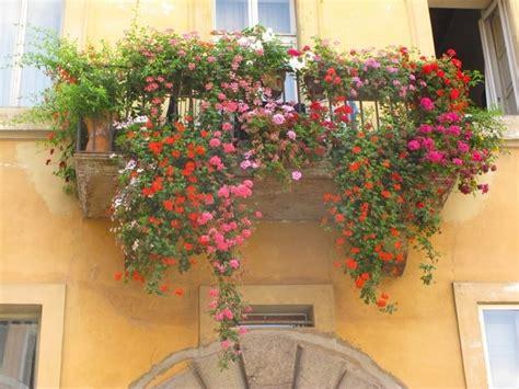 il balcone fiorito balcone fiorito giardinaggio come avere un balcone fiorito