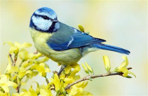 extreme birds the world s most extraordinary and bizarre birds ebook 10 completely bizarre bird facts listverse