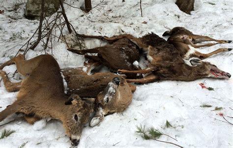 Feeder Deer deer feeders 101 deer feeding tips concerns and