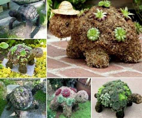 turtle succulent planter succulent sphere diy is your next project the whoot