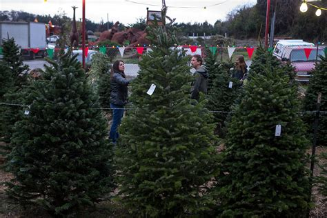 christmas tree lots by me a tree shortage is driving higher prices at lots this year sfgate