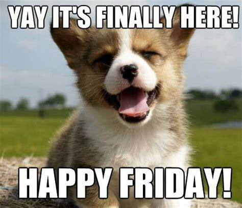 Friday Kawaii Corgi Acting by Happy Friday Babies Happy And Happy