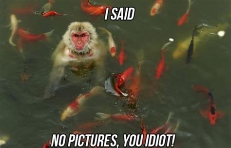 Funny Pics Memes - funny goth meme memes