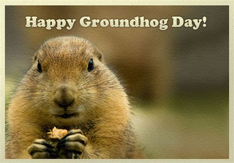 groundhog day type happy groundhog day pictures photos and images for