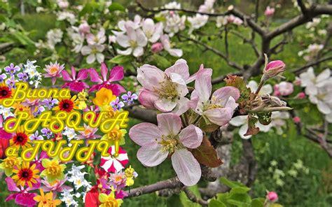 fiori di pasqua fiori di melo e buona pasqua forum natura mediterraneo