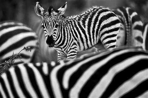 fotos blanco y negro espectaculares foto rayada en blanco y negro