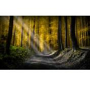 Forests Roads Rays Of Light 5k HD Nature 4k Wallpapers