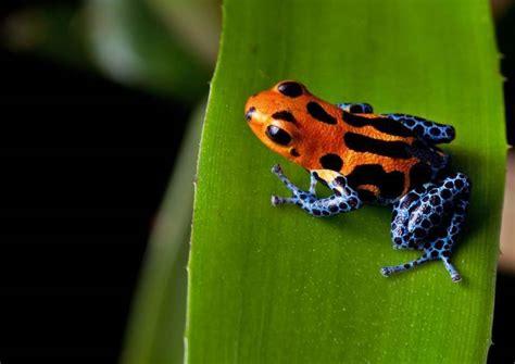 interesting amazon rainforest facts  facts