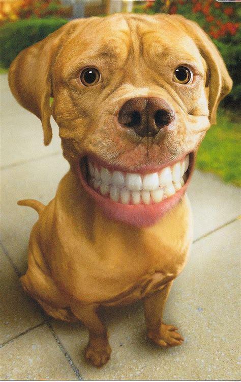 dogs with human teeth smiling animals with human teeth