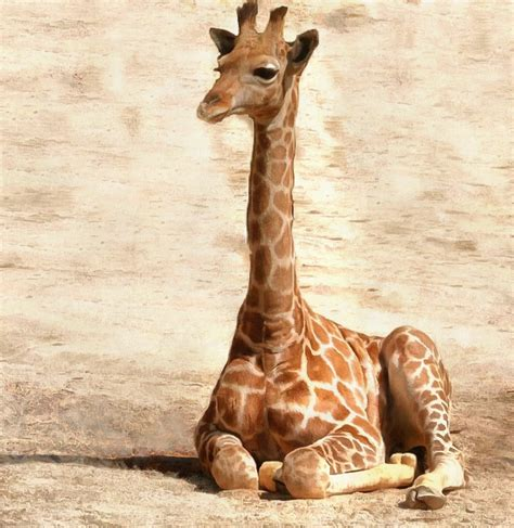 99 q to u animals collection stock images page everypixel baby animals photos photos of small animals domain