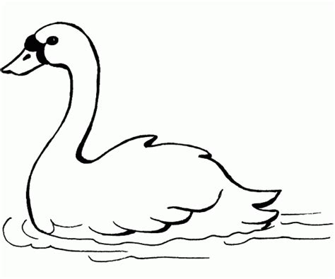 swan coloring pages swan free printable coloring pages
