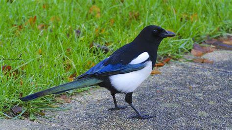 How To Keep Birds Patio by File More Birds In Garden 11710048216 Jpg Wikimedia